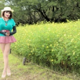 『【留美子讃歌 56】一面のイエローの宇宙(コスモス)畑をウオーキングする留美子さん』の画像