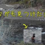 『【あめご釣り行っちょった5回目】大風』の画像