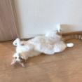 猫が落ちてる季節