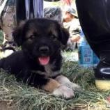 『天津爆発跡地で発見された仔犬』の画像