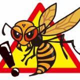 【閲覧注意】中国のオオスズメバチ、想像以上にヤバすぎて草wwwwwwwwwwww