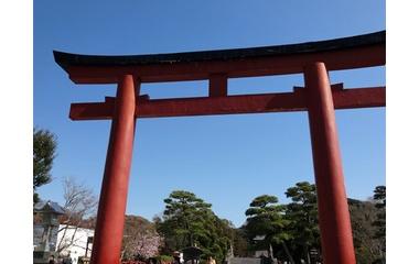 『鎌倉の旅1 鶴岡八幡宮』の画像