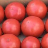 『国東の食環境(149)塩トマト』の画像
