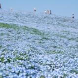 『いつか行きたい日本の名所 国営ひたち海浜公園』の画像