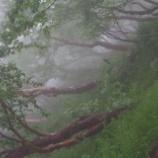 『岳樺の森』の画像