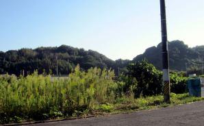 「消えた煉瓦造りのゴミ捨て場」