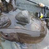 『早春の里川大岩魚』の画像