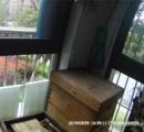 アパートのベランダで1万匹のミツバチを養蜂 飼い主「被害を与えていないし刺されても問題ない」