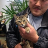 沖縄産子猫は、あっと言う間に里親が決まった! 2017年3月31日の写真