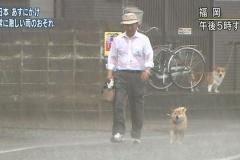(∪`ω´)「散歩連れてけや」 梅雨到来 いかにして犬の散歩をさせるべきか