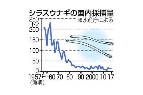【悲報】日本人「鰻が減少してるのは中国人が捕りすぎたから!」←1960年からシラスは減少傾向でしたのサムネイル画像