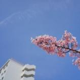 『【写真】RX1 - 平井の桜 』の画像