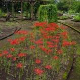 『9月の都立薬用植物園Ⅲ;小平市』の画像