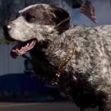 『今回は犬も仲間に出来る!「Far Cry 5(ファークライ5)」のゲームプレイ映像公開!』の画像