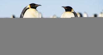 ペンギンとかいうぐうかわ生物