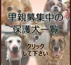 ★現在募集中の保護犬一覧&譲渡条件★