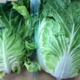 『キャベツと白菜を区別できないスーパーの青年レジ係!サンクス!』の画像
