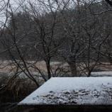 『初雪の朝』の画像