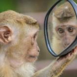 『猿から人間に進化した途中の生物が発見されない謎』の画像