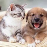 『イヌやネコが見せる愛しさの不思議「つぶらな瞳で訴えかけてくるペット達」』の画像