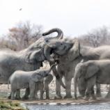 『ゾウに学ぶ家族と愛の在り方』の画像