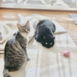 『猫とキッチン④』の画像