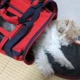 『ペットと幸せに生きる1』の画像