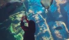 西野七瀬、水族館を満喫する動画キタ━━━━━━(゚∀゚)━━━━━━ !!!!!