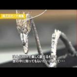 『関西テレビ(ビジネス関西)の取材』の画像