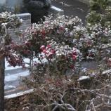 『2013年冬』の画像