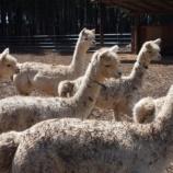 『アルパカもやってくる! 9月25日戸田市後谷公園まちかど広場で「移動動物園」開催!』の画像