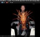 【画像】世界最大級 体重5キロの巨大ロブスター(年齢70歳以上)が出現