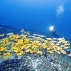 口之島ダイビングサービス最新情報