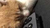 猫可愛いよな(※画像あり)