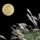 ありしにも あらずなりゆく 世の中に かはらぬものは 秋の夜の月