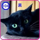『里親募集【ヤマコ】104』の画像