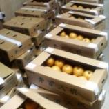 『梨の仕込が始まりました』の画像