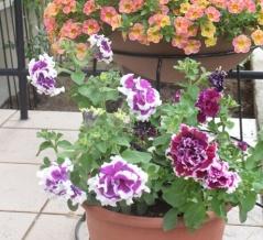 【ガーデニング】玄関先にお花がいっぱい♪