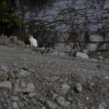 『北新宿再開発』の画像