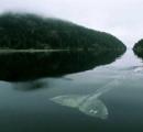 【画像】海洋恐怖症が発狂する画像、発見される