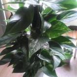 『観葉植物を利用した家相の調律』の画像