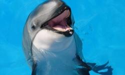 イルカとかクジラって肺呼吸のくせに