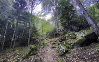 『甲武信岳(毛木平登山口)山友さんと美しい苔歩き✨』の画像