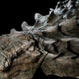 【驚愕】1億年前の恐竜が食べた「最後のえさ」、珍しい胃の内容物の化石から判明 研究者から驚きの声 カナダ