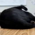 ネコが机の上にいた。丸くなる → こうなった…