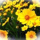『土手の花とライムライト』の画像