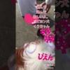 【動画】ヒカキン ヒカキン大好き フィッシャーズ フィッシャーズ大好き くうちゃん パピヨン 子犬 犬 ワンちゃん チャンネル登録お願いいたします。