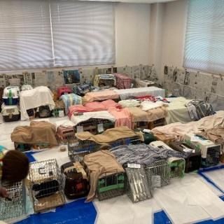 NPO犬猫みなしご救援隊・代表ブログ・みなしご庵へようこそ