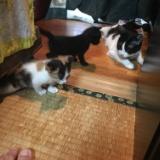 子猫 チマちゃんの写真のサムネイル
