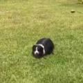 イヌが芝生の真ん中でうずくまっていた。飼い主が近づいてみる。どうしたの? → ファッ!?